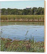 Great Egret On Berm Pond At Tifft Nature Preserve Buffalo New York Wood Print