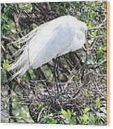 Great Egret On Nest Wood Print