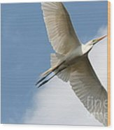 Great Egret Overhead Wood Print