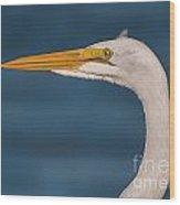 Great Egret Portrait Wood Print