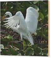 Great Egret Pose Wood Print