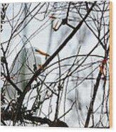 Great Egret Roosting In Winter Wood Print