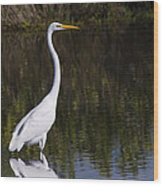 Great Egret Standing Out Wood Print