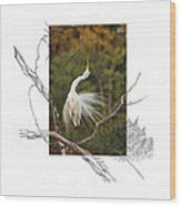 Great Egret - Stretch Wood Print