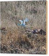 Great Egret Takes Flight Wood Print