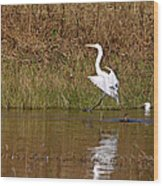 Great Egret Wing Water Reflections 3 Wood Print