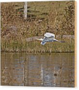 Great Egret Wing Water Reflections Wood Print