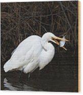 Great Egret With Big Fish Wood Print