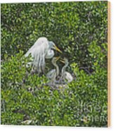 Great Egret With Chicks On The Nest Wood Print