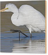 Great Egret With Leg Up Wood Print
