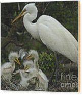 Great Egret With Young Wood Print