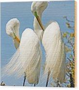 Great Egrets At Nest Wood Print