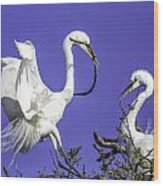 Great Egrets Nesting Wood Print
