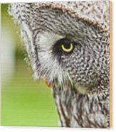 Great Gray Owl Close Up Wood Print