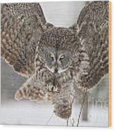 Great Gray Owl Pictures 634 Wood Print