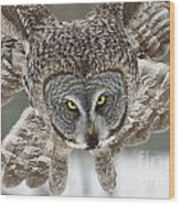 Great Gray Owl Pictures 648 Wood Print
