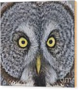 Great Gray Owl Pictures 680 Wood Print
