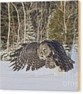Great Gray Owl Pictures 740 Wood Print