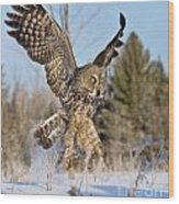Great Gray Owl Pictures 767 Wood Print