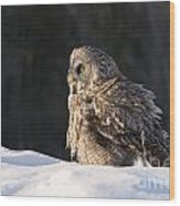 Great Gray Owl Pictures 788 Wood Print