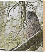 Great Gray Owl Pictures 804 Wood Print