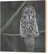 Great Gray Owl Portrait North America Wood Print