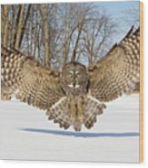 Great Grey Owl Attack Wood Print