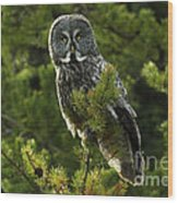 Great Grey Owl On The Hunt Wood Print