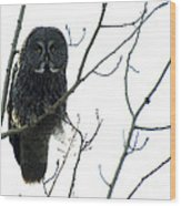 Great Grey Owl On The Lookout Wood Print