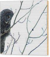 Great Grey Owl On Watch Wood Print