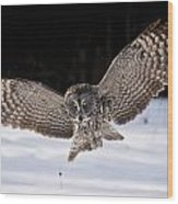 Great Grey Owl Pictures 36 Wood Print