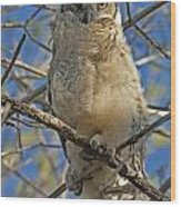 Great Horned Owl 2 Wood Print