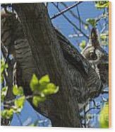 Great Horned Owl 5 Wood Print