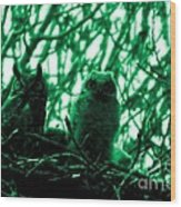 Great Horned Owl And Owlet Wood Print
