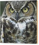 Great Horned Owl At Rest Wood Print