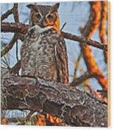 Great Horned Owl At Sunset Wood Print