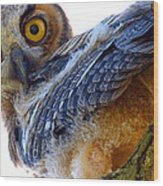 Great Horned Owl Wood Print by Catherine Natalia  Roche