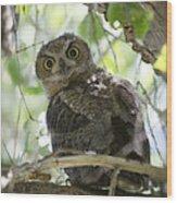 Great Horned Owl Fledgling  Wood Print