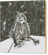 Great Horned Owl In A Winter Snow Storm Wood Print