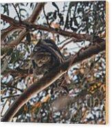 Great Horned Owl Looking Down  Wood Print