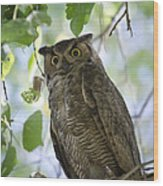 Great Horned Owl On A Branch  Wood Print