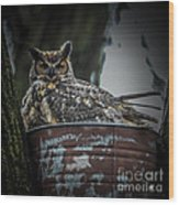 Great Horned Owl On Nest Wood Print