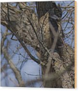 Great Horned Owl On Watch Wood Print