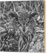 Great Horned Owl V7 Wood Print