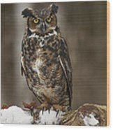 Great Horned Owl Watching You Wood Print by Inspired Nature Photography Fine Art Photography