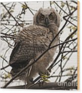 Great Horned Owlet 2 Wood Print