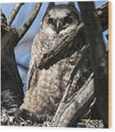 Great Horned Owlet Finishes Lunch Wood Print