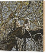 Great Horned Owlets Photo Wood Print