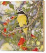 Great Kiskadee On A Branch Wood Print