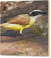 Great Kiskadee Wood Print